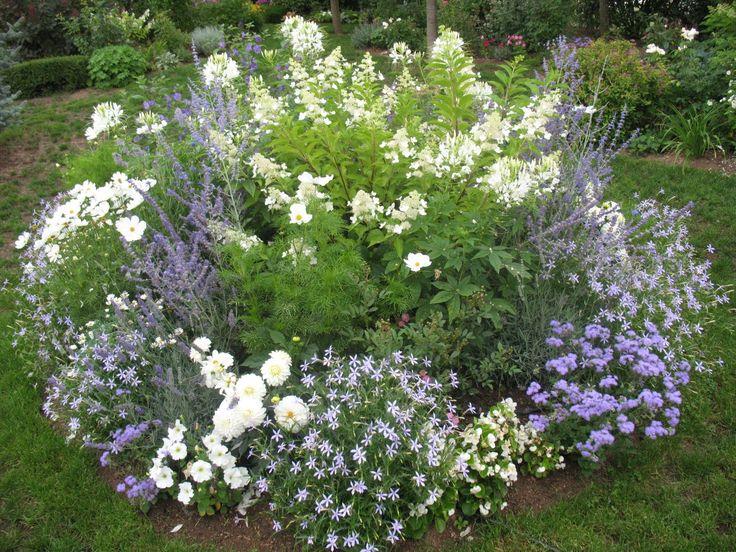 Le jardin de Chêneland: Création dun massif en bleu et blanc.