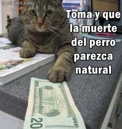 Resultado de imagen para meme gato con celular