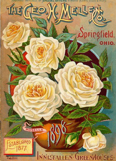 vintage flower catalog