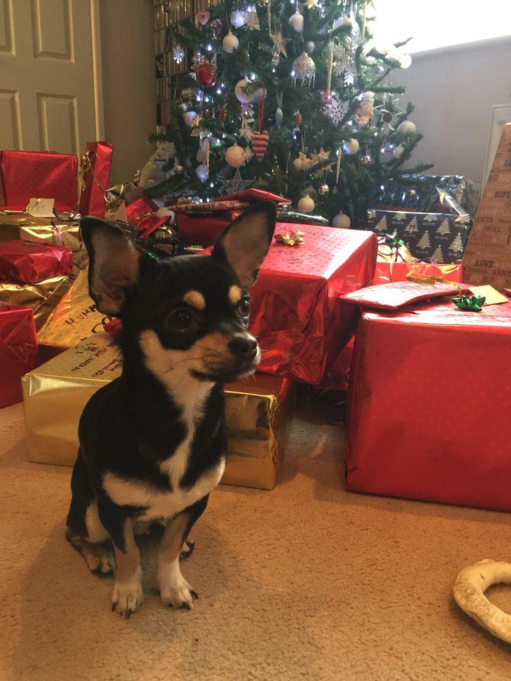 Pixel's 1st Christmas! ❤️