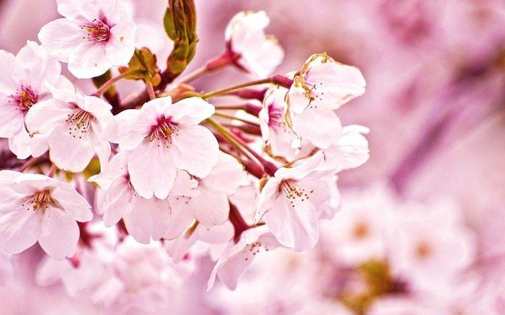 Arabic flower names