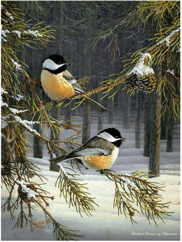 sam timm | das Artes: Os lindos passarinhos de Sam Timm.
