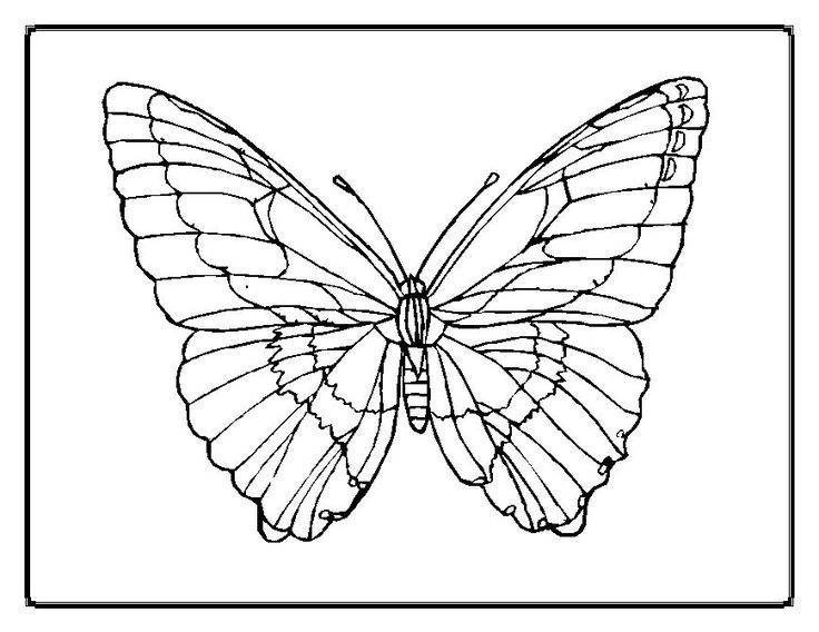 butterfly-coloring-pages00023im.jpg