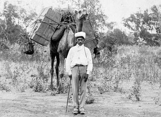 Portrait of an Afghani camel driver and a heavily laden camel. (John Oxley Library, State Library of Queensland, Image number 168171.) c1890