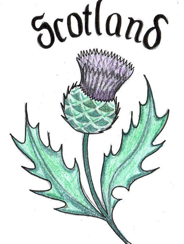 Scottish Thistle Design   scottish thistle by ~bevf2003 on deviantART