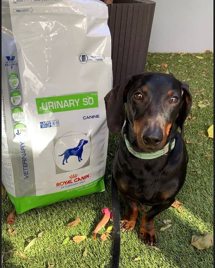 Do you feed your pet Royal Canin kibble? Did you know
