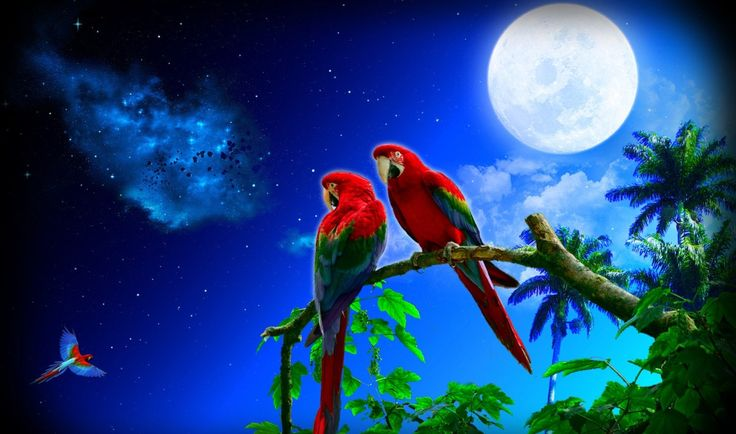 World's Most Beautiful Parrot Images HD Wallpapers 2017