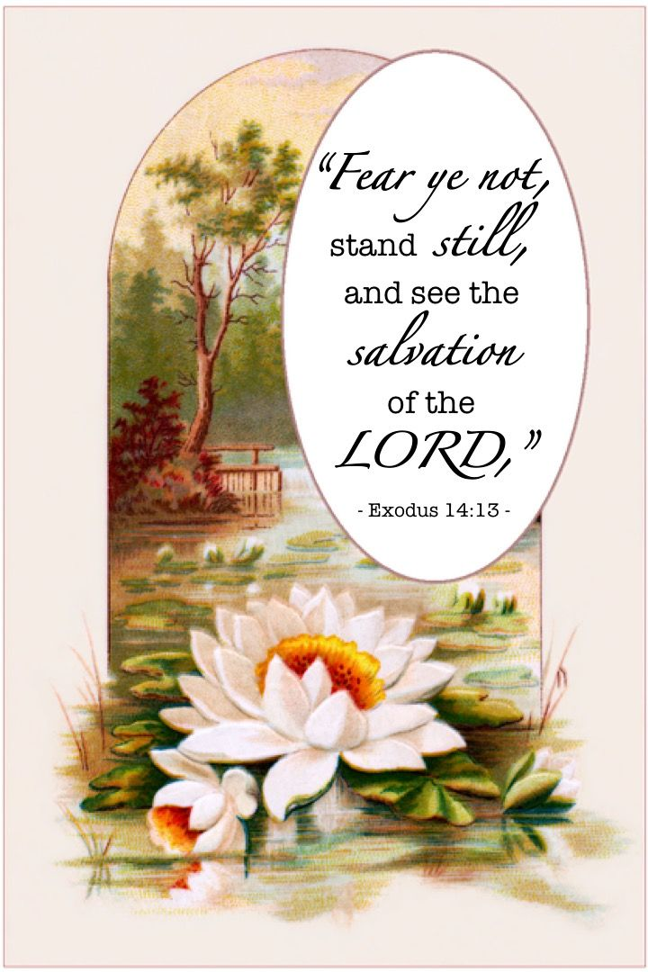 Image result for stand still and see the salvation of the lord kjv