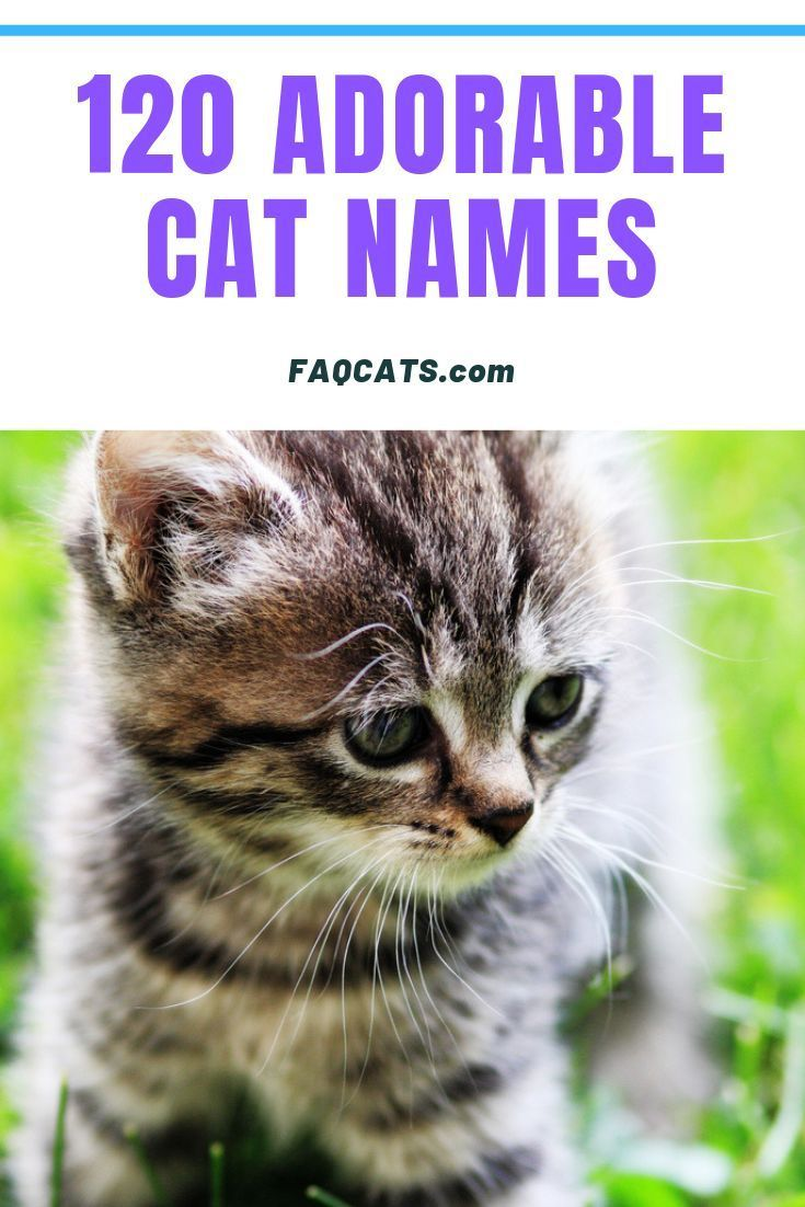 120 Adorable Unisex Tabby Cat Names In 2020 Cute Cat Names Tabby Cat Names Cat Names Girl Unique