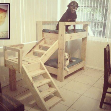 Dog bunk beds from pallets for my critters pinterest for Pet bunk bed gallery