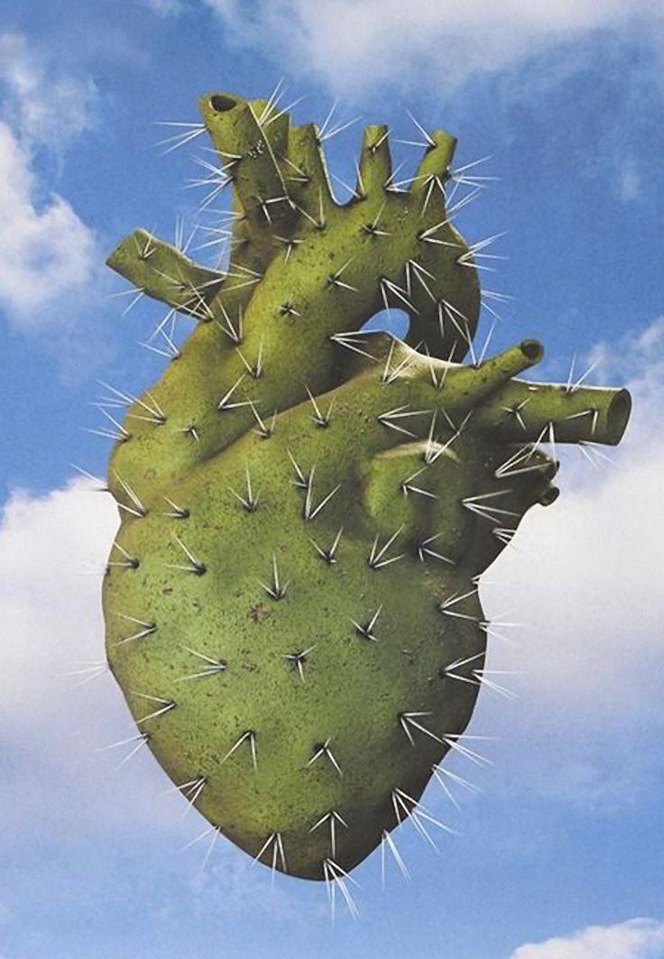 Anatomy Of A Cactus