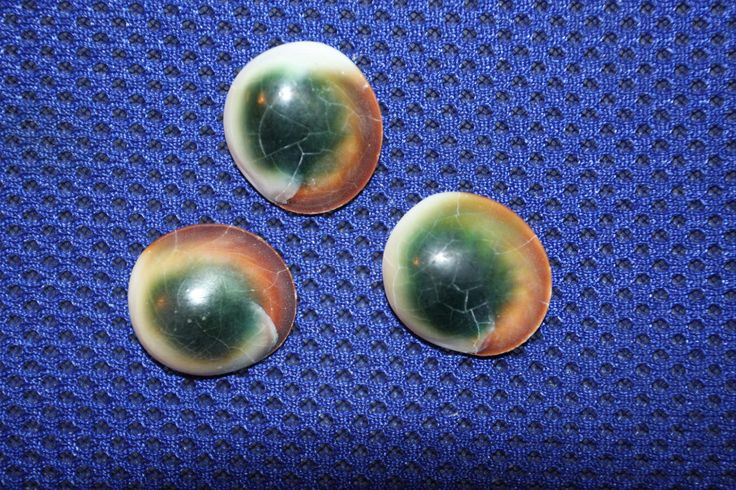 Coastal Supplies  Cats Cat Eyes Shell Buttons Operculum Crafting Decorating  Round Spiral Flat Seashells Green, Free Shipping by RUNNINGTIDE on Etsy