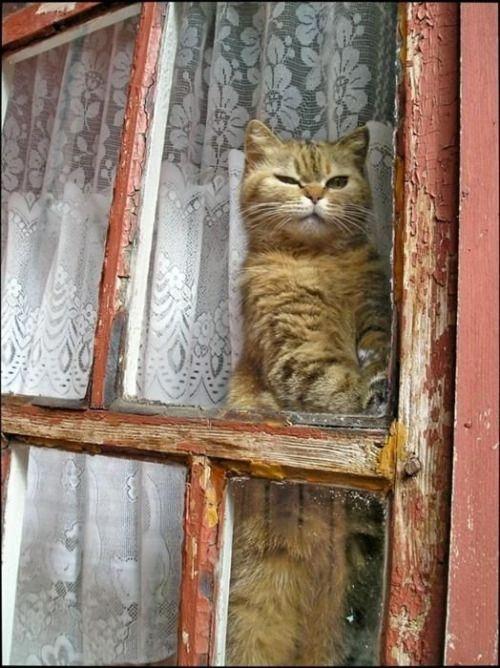 les 169 meilleures images propos de un chat la fen tre sur pinterest chats voyeur et animaux. Black Bedroom Furniture Sets. Home Design Ideas