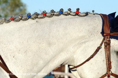 Going Avant Garde In The Junior Nations Cups | The Chronicle of the Horse