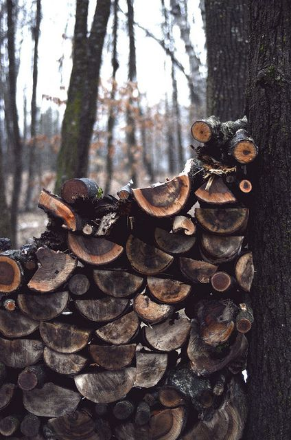 Woodpile ~ Photo by...Erica Lea