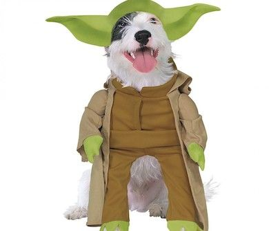 The star wars Dog Yoda Costume will transform your dog into the loveable wise Yoda from the popular movie. you dog will instantly become the envy and talk .