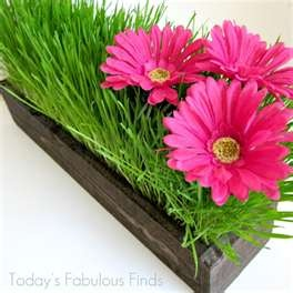 BEAUTIFUL!!! wheatgrass grew in a glass or wooden container with a few gerber daisies....