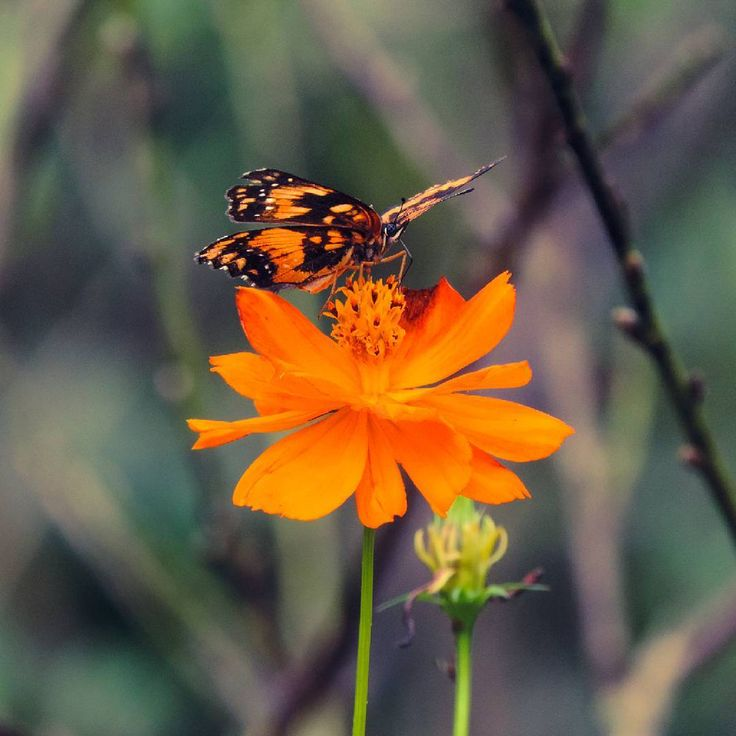 """39 curtidas, 5 comentários - Jessica Gabriela Edel  (@jess_edel) no Instagram: """"Colors are the smiles of nature. #color #flowers #butterfly #amazing #beautiful #photography…"""""""