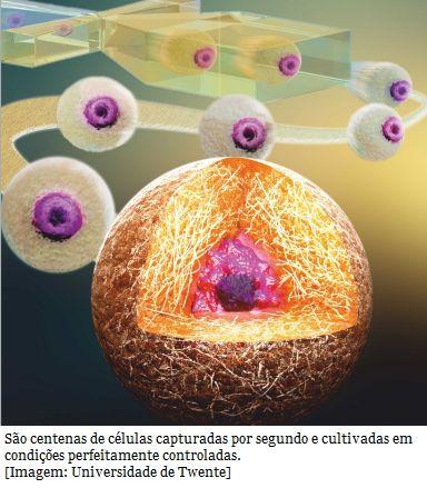 Chip cultiva células individuais para estudo e teste de medicamentos  Pesquisadores desenvolveram um dispositivo - uma espécie de biochip - que permite capturar e manter células individuais no centro exato de uma minúscula gota de hidrogel. Isso mantém as células vivas por várias semanas, o que facilita seu estudo, possibilitando, por exemplo, testar a ação de novos medicamentos e melhorar as terapias de células-tronco