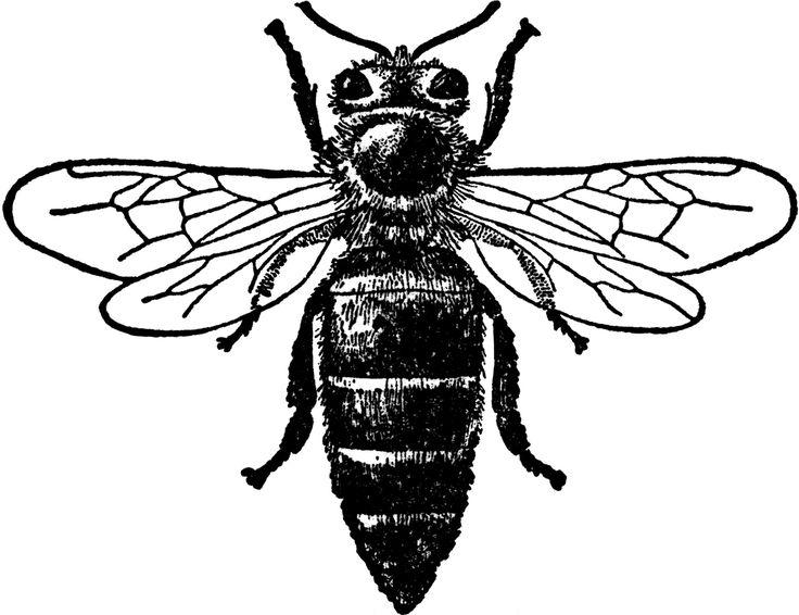 Queen Bee Bee Art Bee Drawing Queen Bees Art