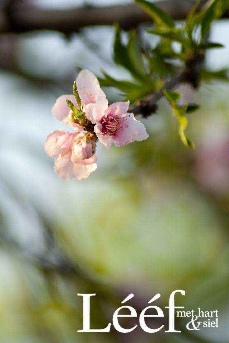 Lente/Spring Fotograaf: Hanneri de Wet www.leef.co.za
