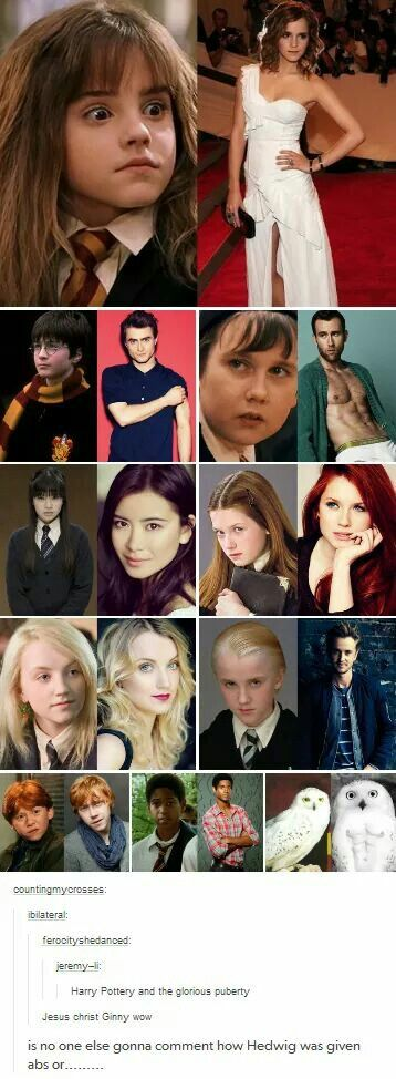 Puberty was kind to the HP cast. Please also take a moment to appreciate Hedwig's new abs.
