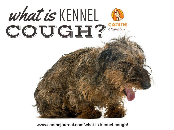 Kennel Cough: Causes, Symptoms & Treatment