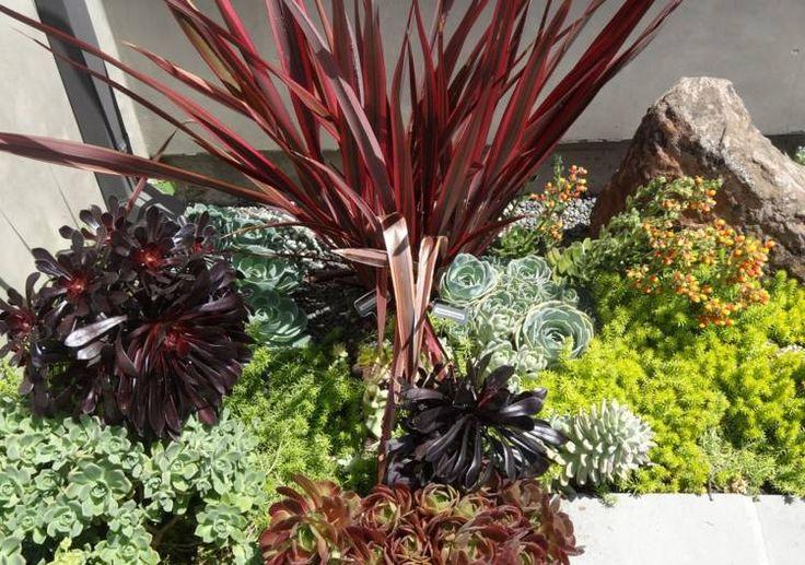 plantes succulentes pour décorer le jardin de rocaille