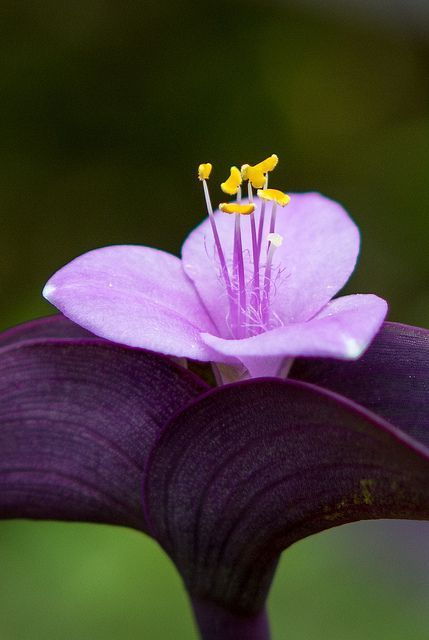 Purple Heart Flowers Garden Love