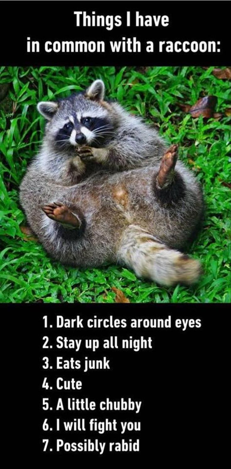 things I have in common with a racoon
