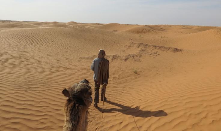 Voyage dans le désert du Sahara.Notre chamelier Ali dirige la méharée vers le lieu qui constituera notre bivouac pour la nuit dans le désert.  PASCALE ROY/AGENCE QMI