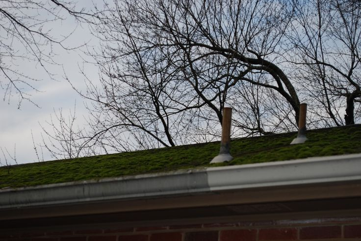 11 Best Natural Living Images On Pinterest Roof Cleaning
