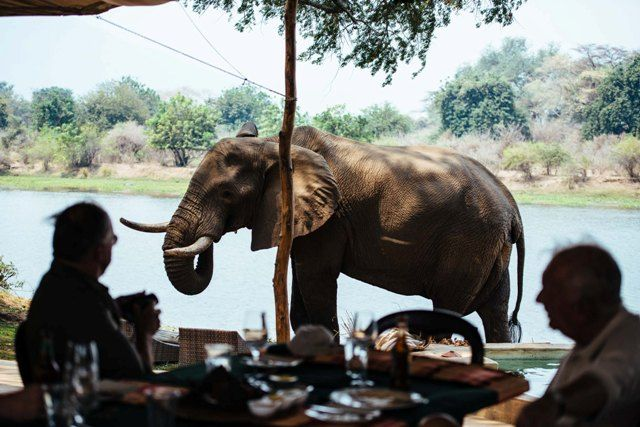 Lunch with the giants - elephants at Chongwe Safaris, Lower Zambezi ZAMBIA