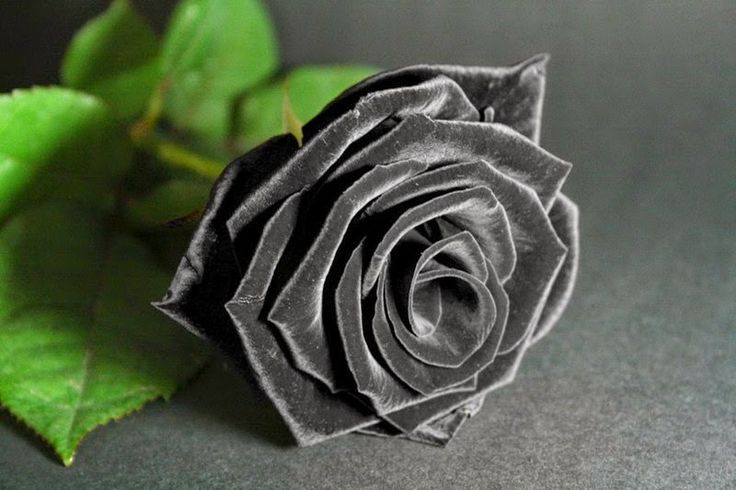 Thoughtful Black Roses ~ Rose Fans - Red Roses, White Roses, Pink Roses, Black Roses