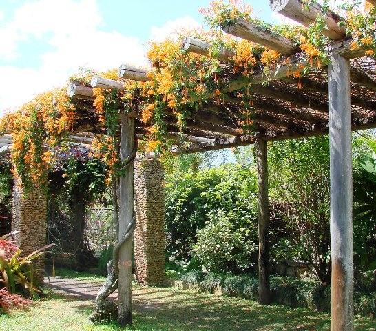 Vine Covered Pergola At Fairchild Gardens Public Gardens
