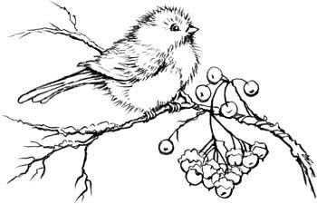 Stampendous Wood-Mounted Rubber Stamp - Snow Bird (New July 2012)