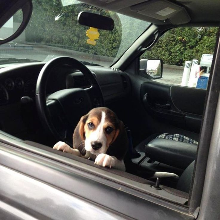 Dog Tricks: Canines Learn to Drive in New Zealand Video ...