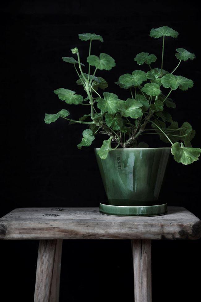 Ernst glaserade kruka i stengods med fat skapar välmående och glädje i varje hem. Krukan kommer i klassiska färger, grå och vit men även med en uppstickare i grönt, för att spegla naturen som människor i dag gärna vill ta med sig in i hemmet.