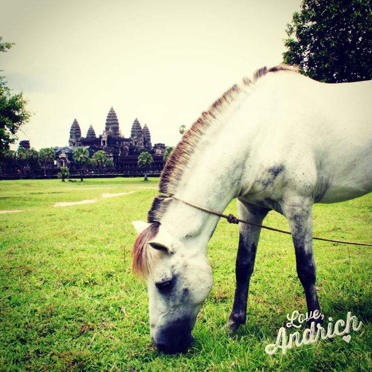 We came across this beautiful horse on our way to Angkor Wat ~ #Travel