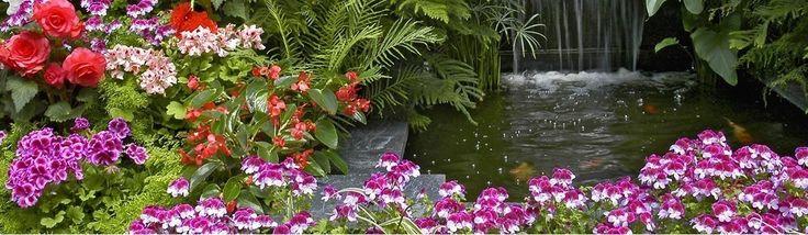 Flori si plante pentru gradina