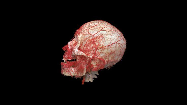 Conoce cómo funciona tu cuerpo humano en la «Human Bodies Exhibition»