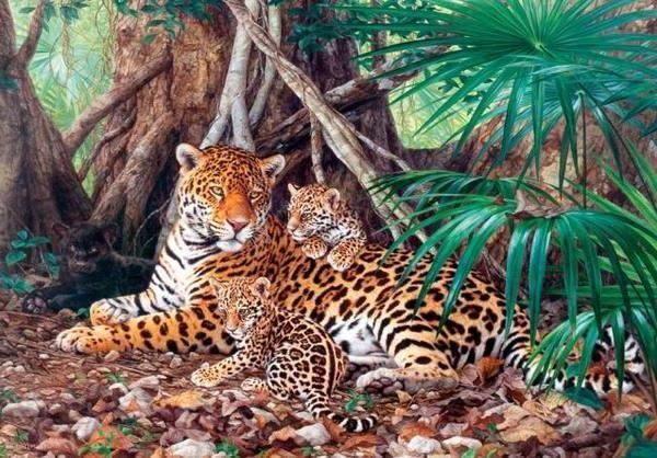 Castorland Castorland, Пазл Ягуары в джунглях, 3000 деталей