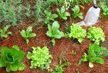 5 fall projects for the lazivore gardener