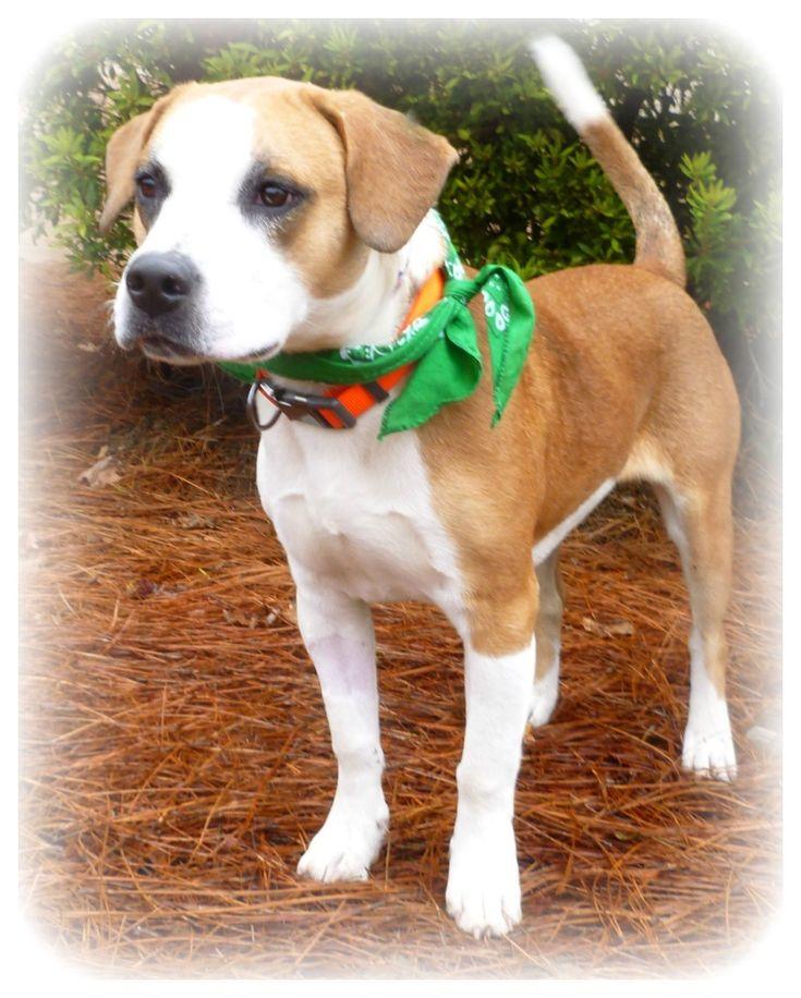 Adopt Max on Petfinder Save a dog, Animal rescue, Adoption