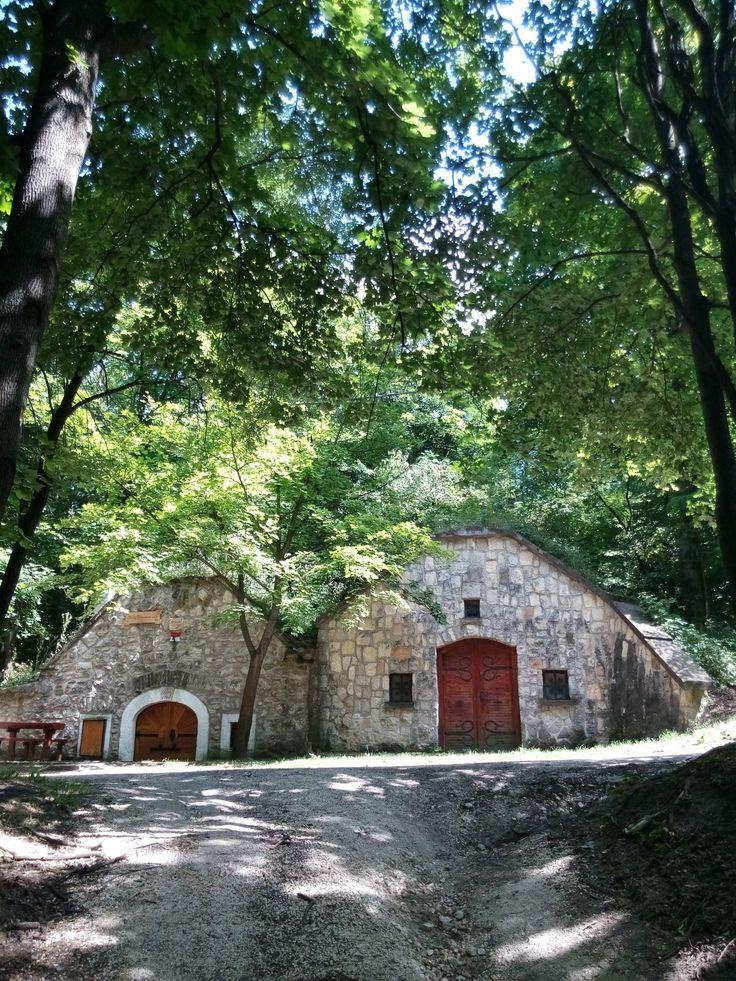 Old wine cellars in Páty.