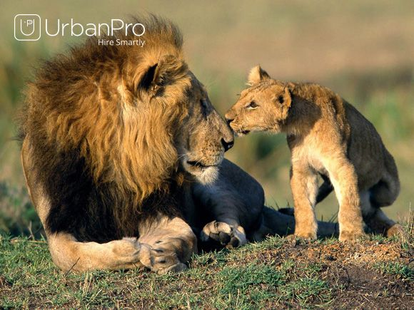 Learn Wildlife Photography From our Best Professional Wildlife Photographer in your Locality @ https://www.urbanpro.com/wildlife-photography-classes?_r=offpage