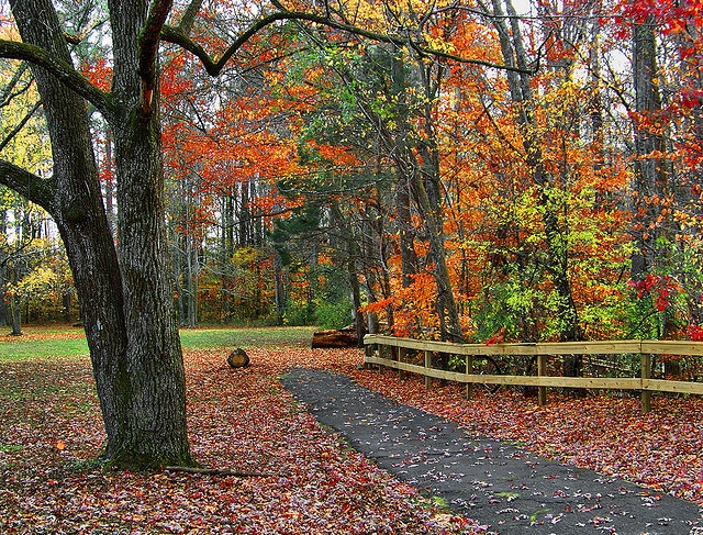 17 Best Images About Travel Tennessee On Pinterest