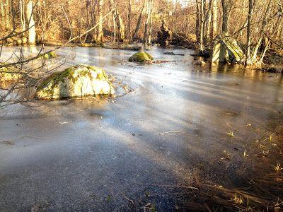 naturensdronning: Dammen på Grubesand
