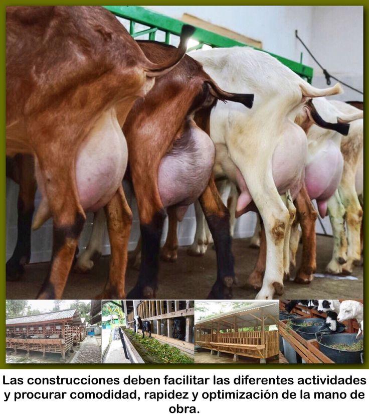 Mejores 65 imágenes de Varios en Pinterest   Agricultura, Animales y ...
