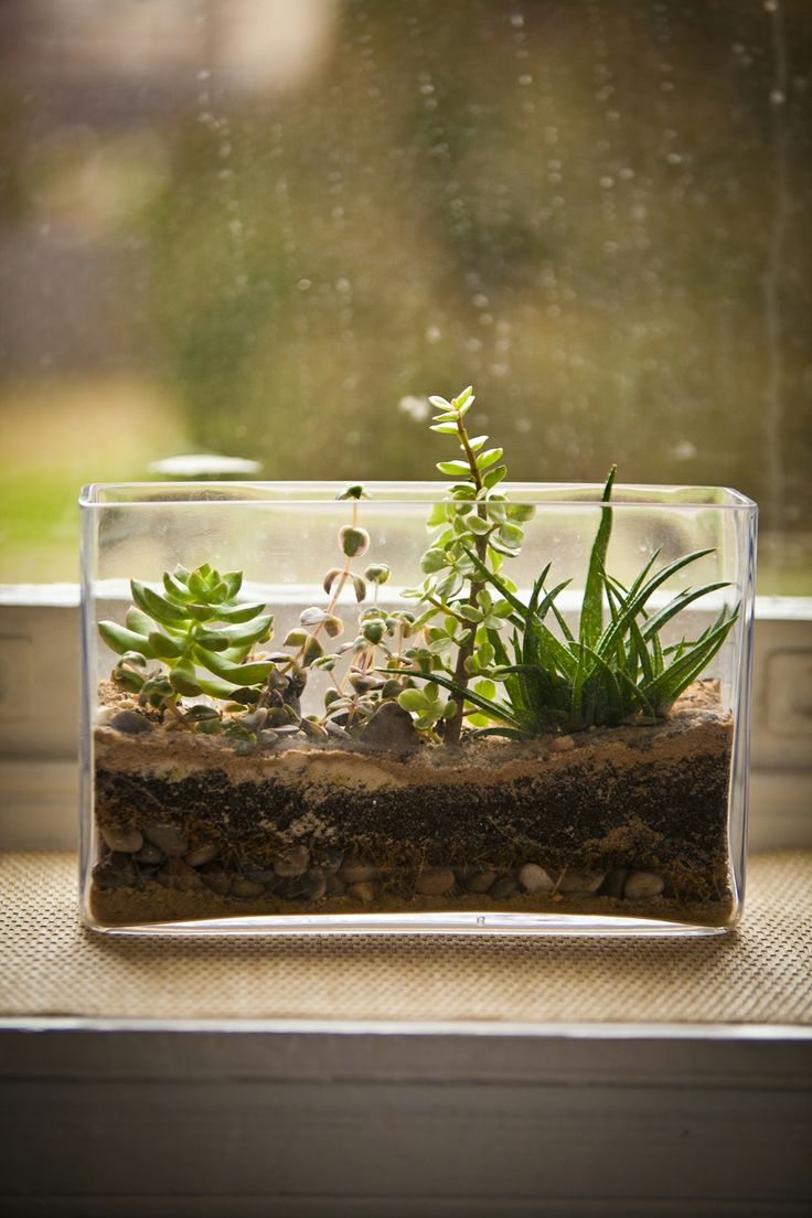 Cacti Terrarium To Fit That Skinny Space Behind The